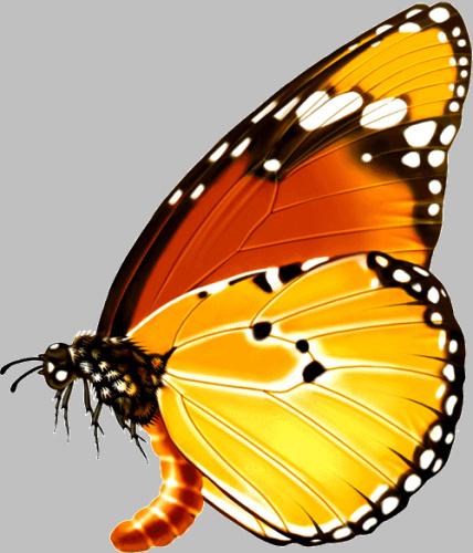 最漂亮的蝴蝶_世界上最漂亮的六种蝴蝶