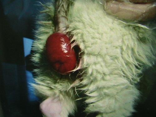 宠物寄生虫化验室诊断图片