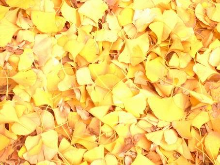 秋天整棵树落叶飘落gif