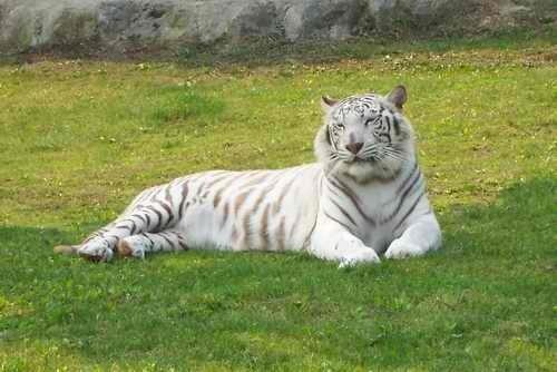 作为大自然的一员,我们怎么做才能保护野生动物?