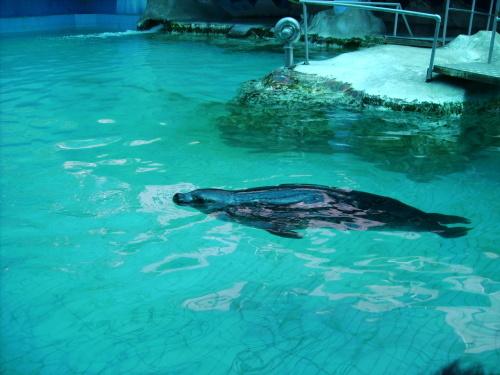 昆明圆通山动物园的水族馆