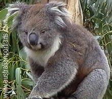 澳大利亚独有的有袋动物