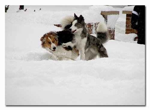 [快乐圣诞节]白色圣诞(四)-嬉雪