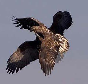 两字母又组成一只飞翔的雄鹰