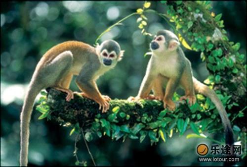 世界上最可爱的猴子