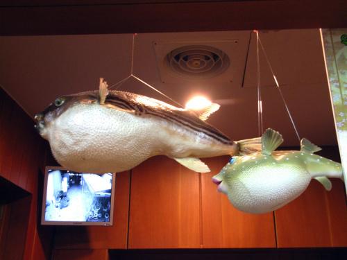 餐厅吊着河豚鱼的模型,非常可爱