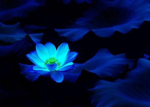 2007年,我将会像这朵莲花一样,在平淡中绽放,在黑暗中发光,2007年,我