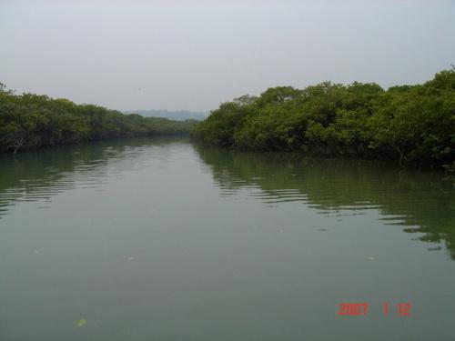 山口红树林一游(图片)