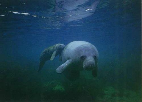 浅海最奇特的动物