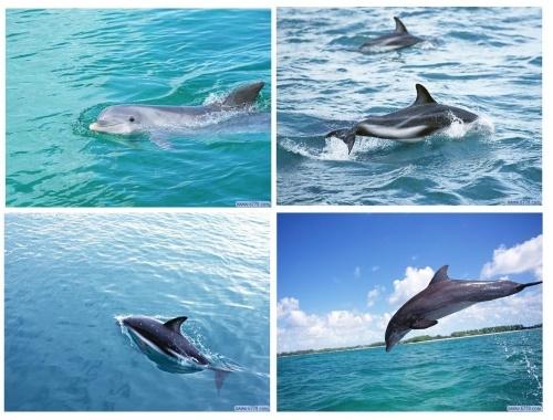 海洋脊椎动物(2)(网络图片,清风编写)