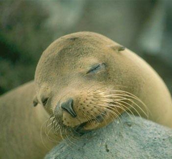 千奇百怪的动物睡姿