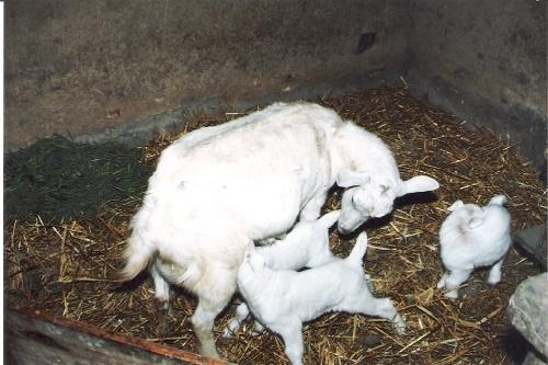 壁纸 动物 兔子 500_333