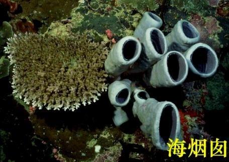 是世界上寿命最长的海洋动物