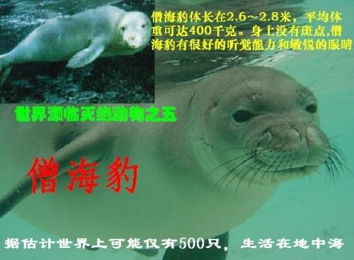 [图片]世界濒临灭绝的珍稀动物