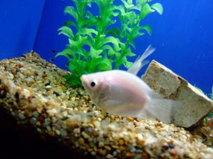 壁纸 动物 海底 海底世界 海洋馆 水族馆 鱼 鱼类 435_324