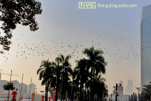 放飞鸽子-five-g旅游摄影-搜狐博客