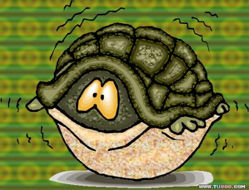 家养乌龟的过冬方法-小宇的【卡布其诺】-搜狐博客