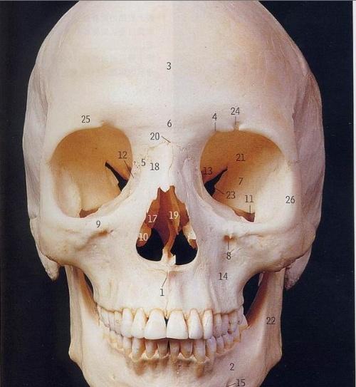 前言颅骨解剖图片