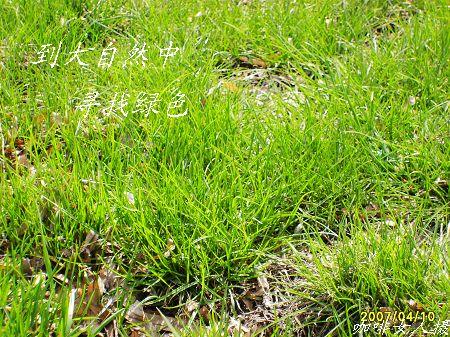 古筝简谱小草的图片