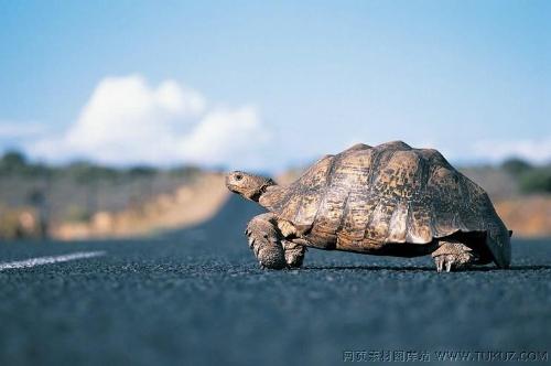小学生作文记事篇_日记 冬眠的小乌龟醒了-成长园-搜狐博客