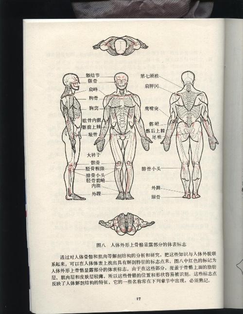 比例 2 解剖 结构 3 空间 结构 4 形体 结构